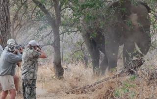 elephant-peregrine-bullets